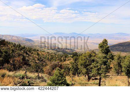 Pinyon Pine Trees Besides Sage And Chaparral Shrubs Taken Where The High Desert And Mountainous Terr