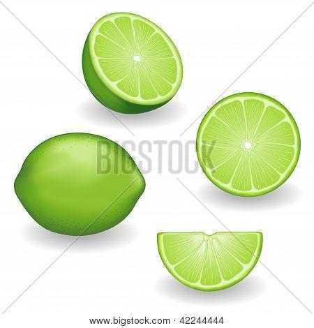 Limes, Four Views