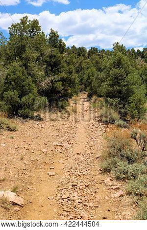 Hiking Trail On An Alpine Plateau Covered With A Pinyon Pine Forest Taken At The Pacific Crest Trail