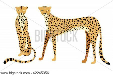 Vector Illustration Beautiful Cheetah, Side View. Big Wild Cat Isolated On White Background. Fastest