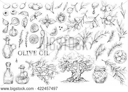 Mediterranean Cuisine Set Of Olives, And Herbs
