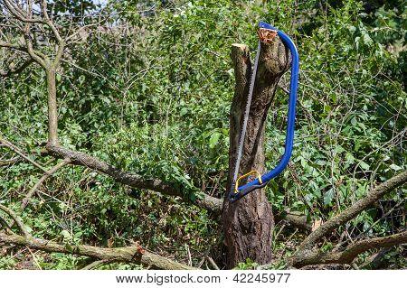 Bucksaw azul con mango amarillo