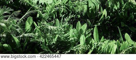 Bright Green Tropical Foliage Of Various Sizes, Natural Landscape. Long Summer Banner Mockup.