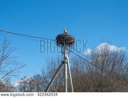 A Stork In The Nest. Storks Arrived In The Spring. Stork's Nest On A Pole. High Voltage Pole And Bir