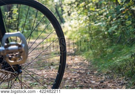 A Bicycle Ride On A Forest Trail. A Bicycle Wheel In The Woods. A Bicycle In The Summer Woods.