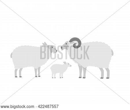 Family Of Farm Sheep, Mom Dad And Lamb