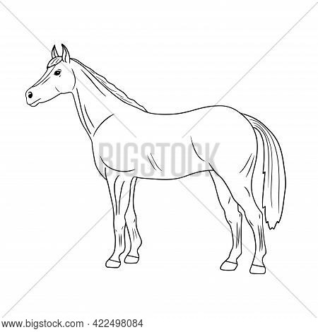 Outline Vector Standing Horse. Series Of Livestock, Farm Animals. Hand Drawn Line Art Sketch, Doodle