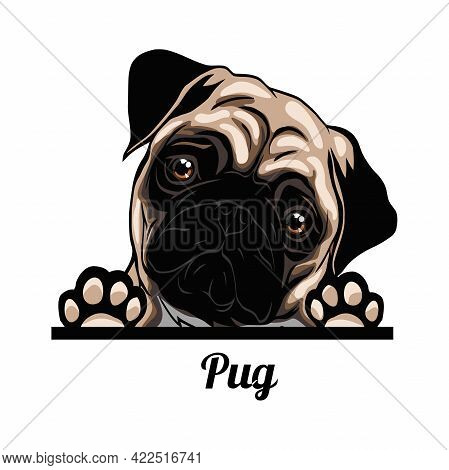 Pug - Color Peeking Dogs - Breed Face Head Isolated On White