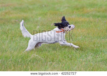 Dog retrieving a bird