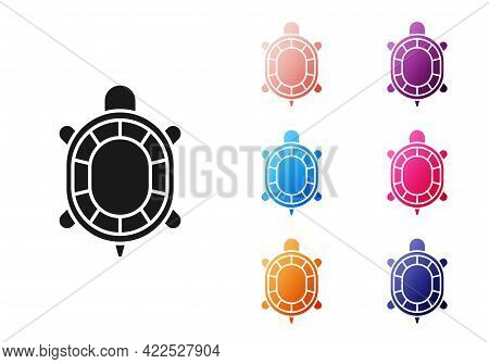 Black Turtle Icon Isolated On White Background. Set Icons Colorful. Vector