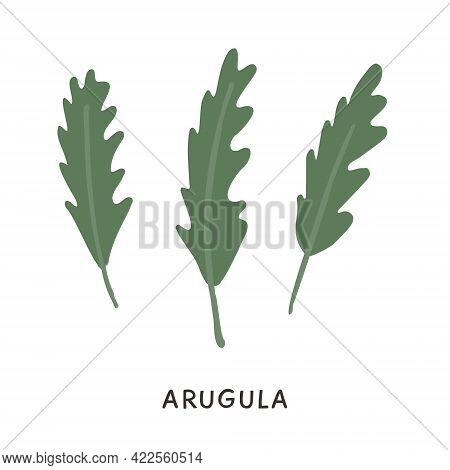 Branch And Stem Of Fresh Arugula In Colored Flat Style. Hand Drawn Green Organic Edible Rucola Rocke