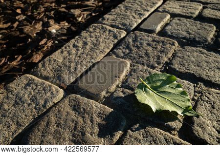 Cobblestone Road In The Park. The Green Leaf Of The Tree Lies On The Stones.