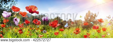 Poppies Field With Butterflies - Sunny Background