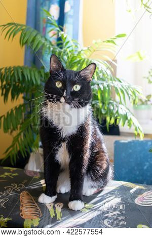 One Black And White Cat Sitting On Ironing Board Near Sunlit Green Home Plants. Vertical Orientation