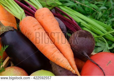 Carrots,  Beets, Zucchini, Eggplant, Tomato,  Ripe Fresh Vegetables And Fruits,