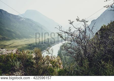 Scenic Alpine Landscape With Beautiful Thickets And Wild Vegetations On Rocks On Background Of Mount