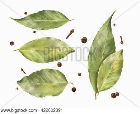Set Bay Leaf And Black Pepper. Vector Illustration.