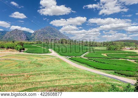 Amazing Landscape View Of Tea Plantation. Nature Background With Blue Sky
