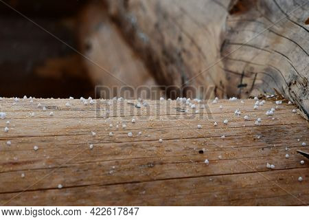 Particles Of Large Spring Hail Lie On A Wooden Log. The Changeability Of Spring Weather. Storm Warni