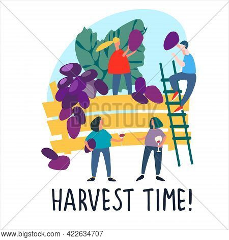 People Picking Grapes. Vector Illustration In Flat Style. Harvest Time Quote