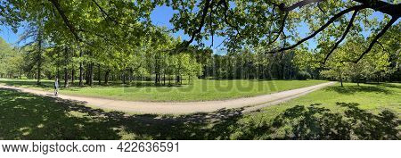 Panorama Of First Days Of Summer In A Park, Long Shadows, Blue Sky, Buds Of Trees, Trunks Of Birches