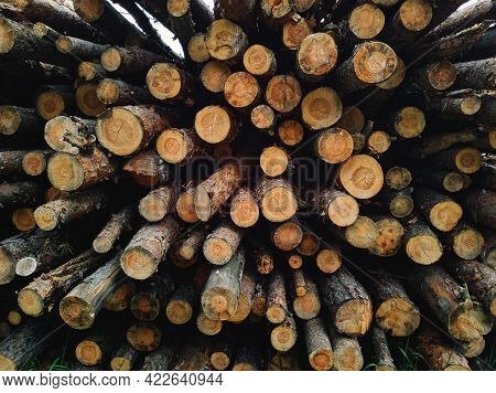 Natural Wooden Background Of Pile Of Raw Wood Logs. Close-up Of Chopped Firewood. Stacked Firewood.