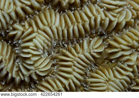 Close-up Of Maze Coral On Coral Reef Off The Tropical Island Of Bonaire In The Caribbean Netherlands