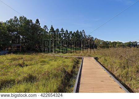 Boardwalk Through Wetlands At Botanic Gardens On A Bright Sunny Day