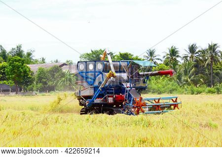 The Farmer Control  Harvester Working On Harvest Rice Field