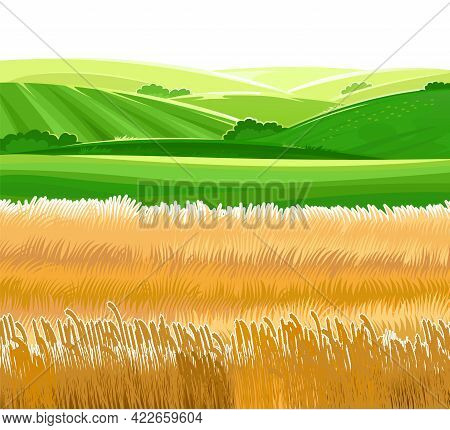 Wheat Fields. Meadow Hills And Pastures. Rural Village Scenery. Ears Of Cereals. Summer Rustic Farm