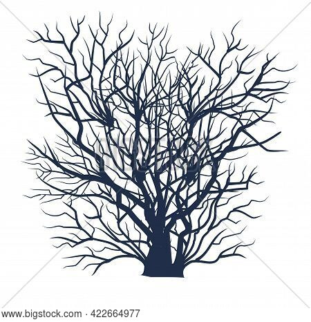 Bare Tree Without Leaves. Dark Black Silhouette. Dense Crown With Many Small Branches. Or Close-up O