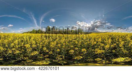 Full Seamless Spherical Hdri Panorama 360 Degrees Angle View On Among Rapeseed Canola Colza Fields I