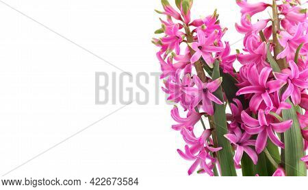 Spring Flowers Composition With Pink Hyacinth Flowers On White Background, Empty Place For Text On T