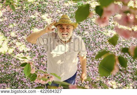 Happy Man Under Sakura Tree Looking Upwards. Happy Smiling Senior Man Looking Up. Old Man Positive A