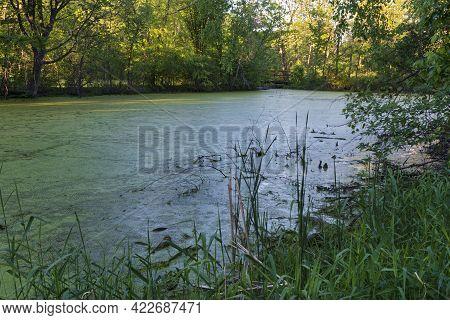 Wentworth Park Pond Environs In Spring West Saint Paul Minnesota