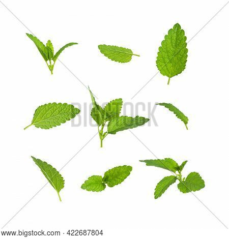 Collection Of Fresh Green Leaves Of Mint, Lemon Balm, Melissa, Peppermint Isolated On White Backgrou