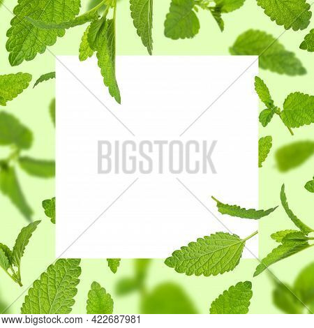 Fresh Flying Green Mint Leaves, Lemon Balm, Melissa, Peppermint, Blank White Square Sheet On Green B