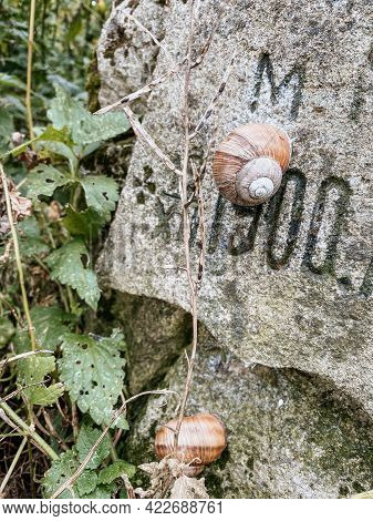 Close Up View Of Snails On Weathered Tombstone - Old Abandoned City Or Village Cemetery. Weathered G