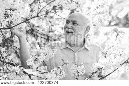 Botanist Examine Tree. Curiosity To Botany. Explore World Around. Pensioner In Garden Sunny Day. Old