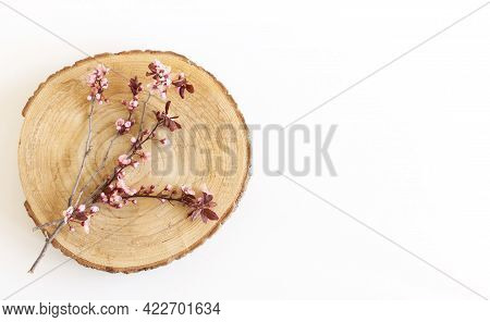Closeup Image Of Delicate Spring Pink Blossom Of Tree Prunus Cerasifera , Black Cherry Plum On Littl