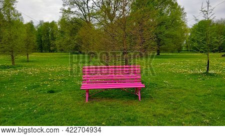 Purple Bench In The Fresh Green Park Standing By Tiny Trees In Beautiful Big Tree Park. The Park Is