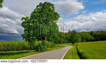 Road Going Through South Bohemian Countryside Around A Big Tree During Beautiful Spring Weather. The