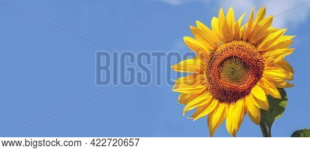 A Close-up Of A Sunflower Against A Blue Sky. Close-up, Side View, Cropped Image, Plenty Of Free Spa