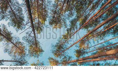 Vertical 4k Beautiful Shadows From Pines Trees In Motion On Autumn Woods. Forest. Sunset Sunlight Sh