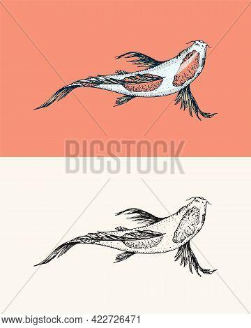 Koi Carp, Japanese Fish. Korean Animal. Engraved Hand Drawn Line Art Vintage Tattoo Monochrome Sketc