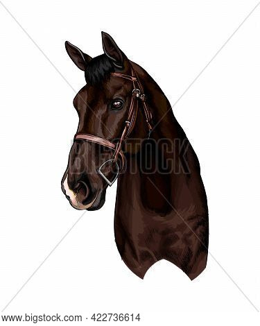 Horse Head Portrait From Splash Of Watercolors, Colored Drawing, Realistic. Vector Illustration Of P