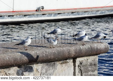 Many Seagulls On A Stone Wall In The Background The Blue Sea, A Seagull With Open Beak In The Day Wi