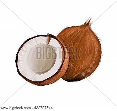 Set Of Whole Coconut, Coconut Halves From Splash Of Watercolors, Colored Drawing, Realistic. Vector