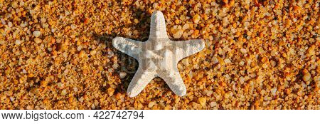 high angle view of a white starfish on the wet sand of the seashore of a beach, in a panoramic format to use as web banner or header
