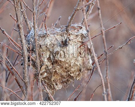 Bird Nest In The Snow: A Former Hummingbird Nest Clings To The Frozen Brush Branches As Winter Moves
